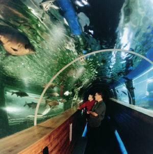 Lakes Aquarium.